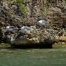 Antigua - vacanze in barca a vela a noleggio - © Galliano